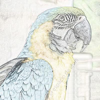 Foto a dibujo en color - más detalle