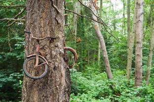 Bicicleta engullida por un árbol, California - Créditos: Ethan Welty