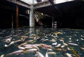 Centro comercial abandonado, Bangkok - Créditos: Jesse Rockwell