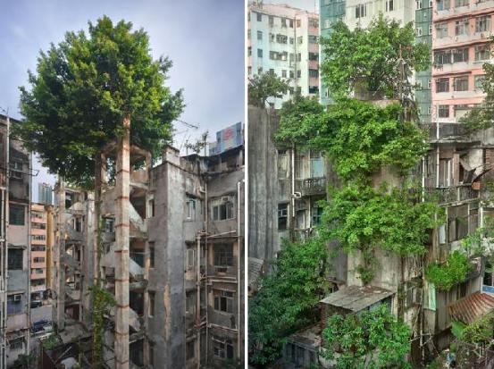 Árboles contra Hormigón, Hong Kong - Créditos: Romain JL