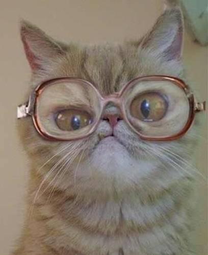 El gato con gafas / Puss in glasses   El espacio de Chus