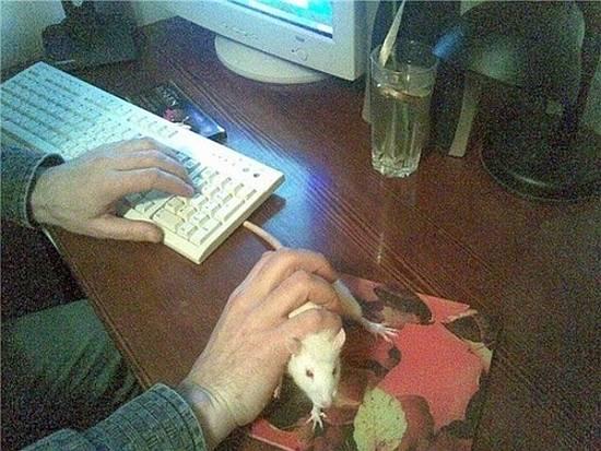 Mi nuevo ratón para el PC / My new computer mouse