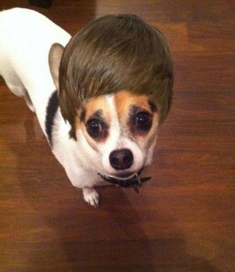 ¿Justin Bieber?