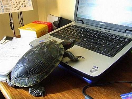 El usuario perfecto para Internet Explorer / The perfect user for Internet