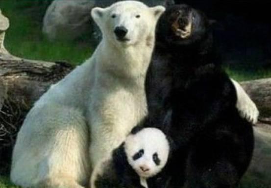 La verdad acerca de los pandas / The real truth about pandas