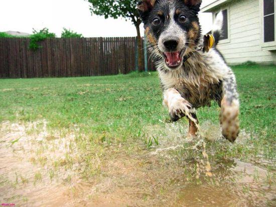No hay nada en el mundo más amigable que un perro mojado / Nothing in the world is friendlier than a wet dog