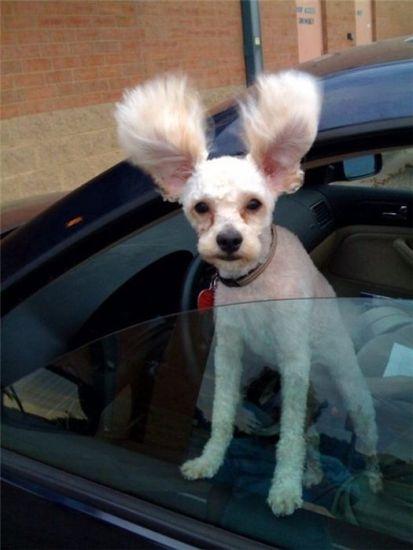 Soy todo oídos / I'm all ears