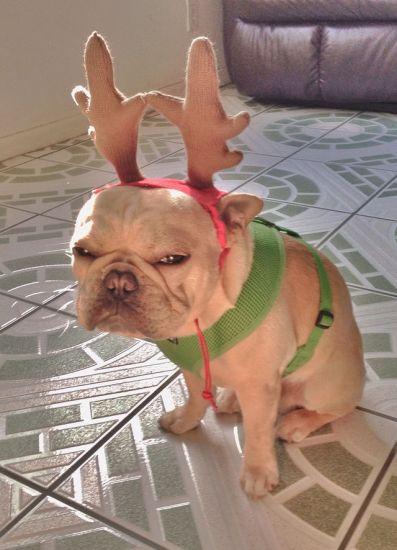 Esperando la Navidad / Waiting For Christmas