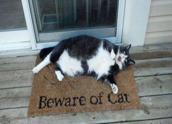 Cuidado con el gato / Beware of cat