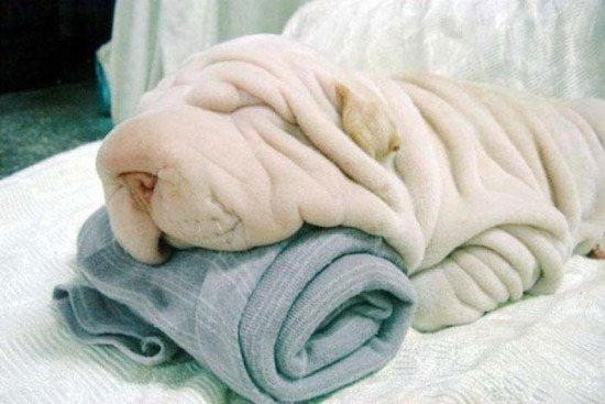 ¿Perro o toalla? / Dog or towel?