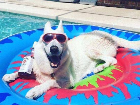 Vida de perros / Dog's Life