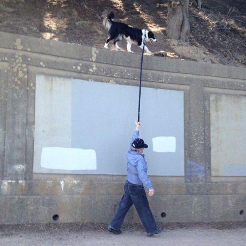 Paseando al perro / Walking the dog