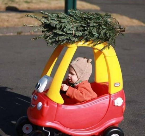 Recogiendo el árbol de Navidad / picking up the Christmas tree