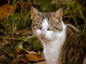 Gato / Cat