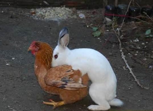 Y así es como se hacen los huevos de Pascua / And that's how Easter eggs are made