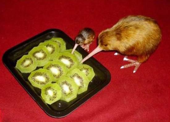 Canibalismo / Cannibalism