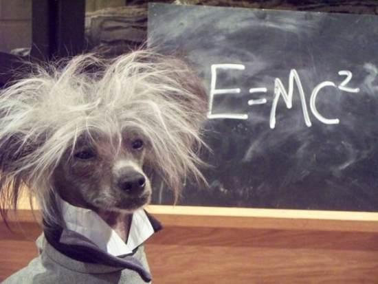 El perro de Einstein / Einstein's dog