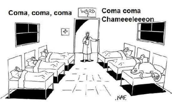 Coma, coma, coma, coma coma chameleon