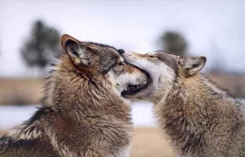 El primer beso de todos / Everyone's first kiss