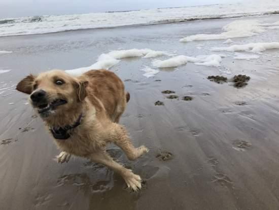 Primera vez en la playa / First time at beach