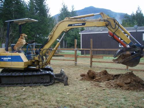 Mamá, el perro está excavando en el patio otra vez / Mom, the dog's digging in the yard again