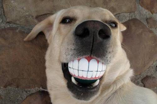 Sonríe ¡es viernes! / Smile it's Friday!