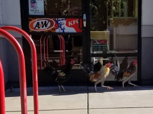 Protesta a la puerta del KFC / Protesting outside KFC
