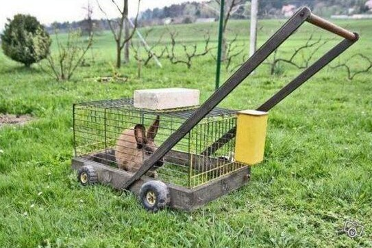 Cortacésped / Lawn mower