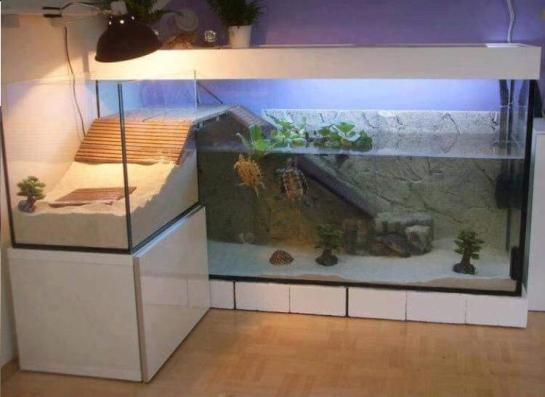 Cuando las tortugas tienen un apartamento mejor que el tuyo / When Turtles have a better apartment than you do