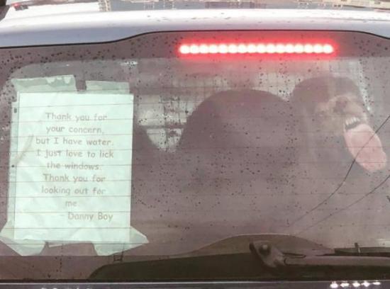 Limpiador de ventanas / Window cleaner