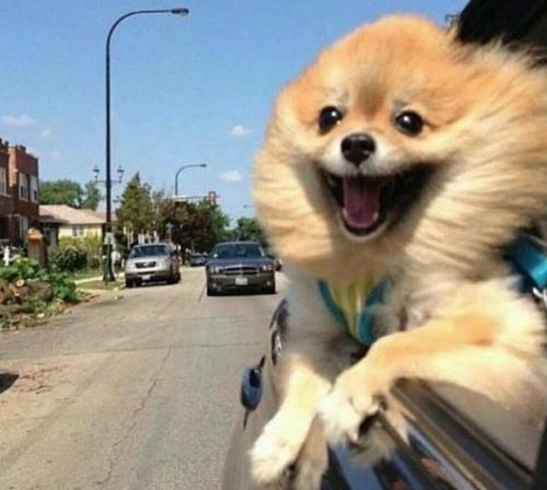 Yo camino a cagarla / Me, on my way to make bad decisions