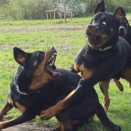 Cuando intentas abrazarla pero todavía está enfadada contigo / When you try to hug her, but she's still mad at you