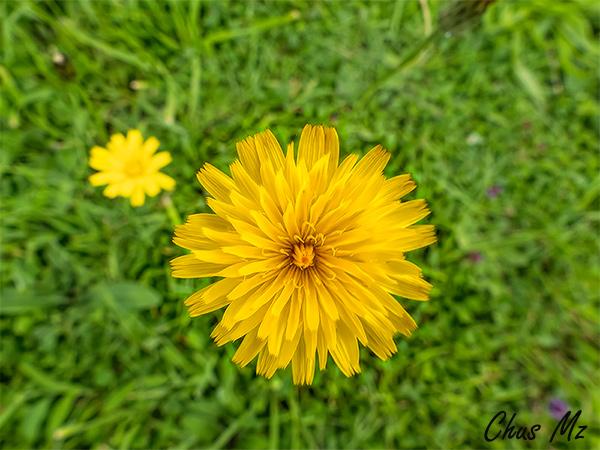 Fotos desde mi cámara / Photos from my camera